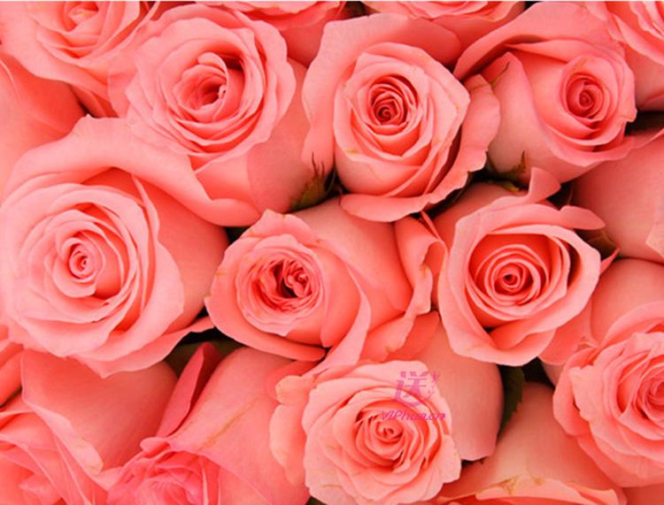 守护幸福—快送鲜花网 完美鲜花 情人节订花 网上花店 异地订花网站