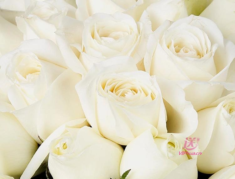 简约的爱—快送鲜花网|石家庄鲜花礼品|同城快送|情人鲜花推荐|