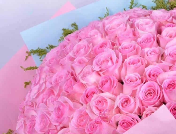 粉美人—快送鲜花网 石家庄速递鲜花 同城情人节订花 礼品鲜花 邮政速递