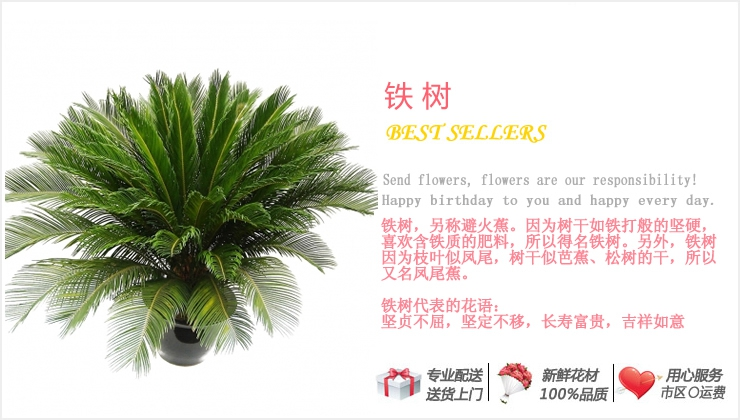 铁树—快送鲜花网|绿植花卉|异地送花|网上送鲜花|盆栽花卉|办公室绿植|市内绿植